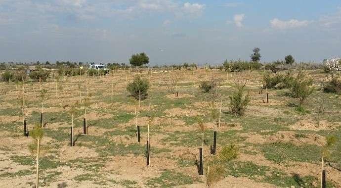 El Bosque de los Ciudadanos, un éxito de participación