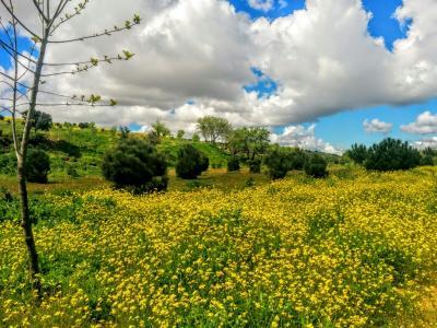 Explosión primaveral en Valdebebas