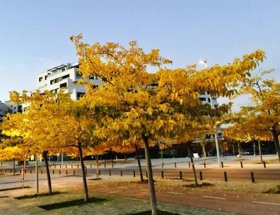 El otoño envuelve Valdebebas